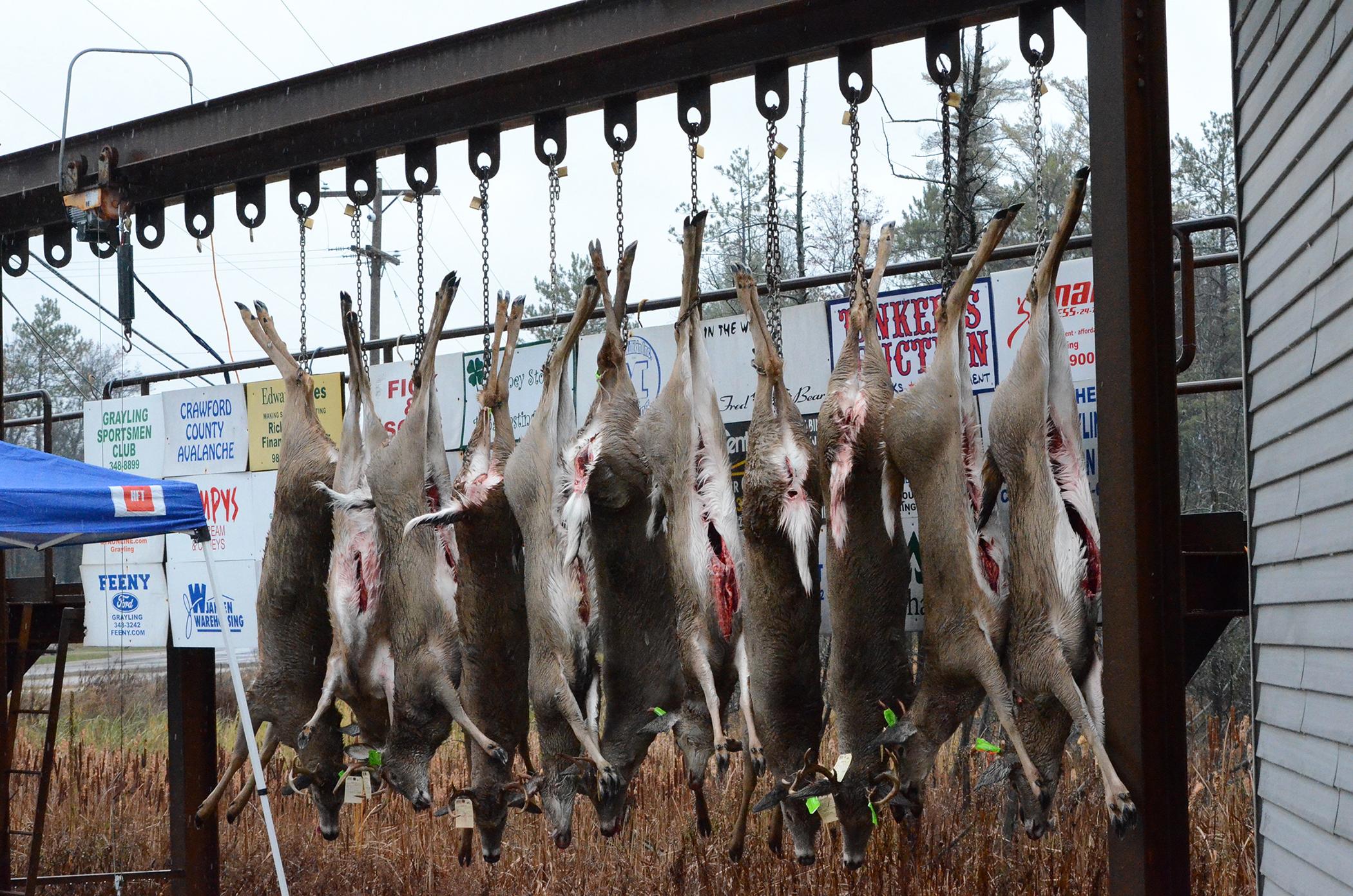 Buck Pole Day 1